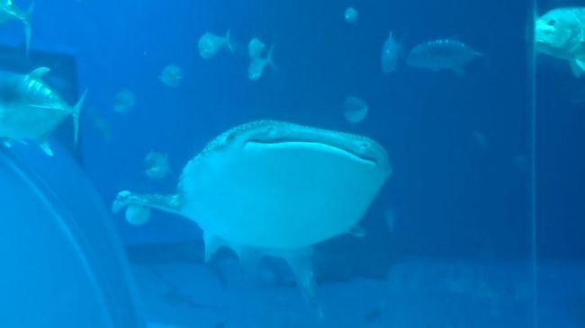 沖縄訪問2019①(美ら海水族館で有名な海洋博公園)