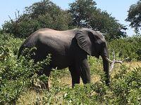 南部アフリカ3ヵ国周遊7日間の旅 〜野生動物と滝と喜望峰〜 その3