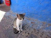 モロッコ旅(前編):迷宮都市と古代ローマの遺跡と青い街の猫