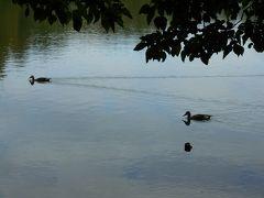 三宝寺池と石神井公園界隈