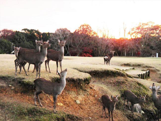 このところ週1、2度ペースで訪れてる奈良。<br />ちょいと用事を済ませた後、これといって目的もないけど<br />つい、行ってしまいました。<br />奈良駅に着いた時点で3時半。<br />お得意のやみくもに歩いて鹿と遊んだだけの旅。