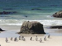 南部アフリカ3ヵ国周遊7日間の旅 〜野生動物と滝と喜望峰〜その6