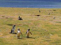 会心の晴れ続き、パタゴニア〜ペンギンの島、マグダレナ島〜