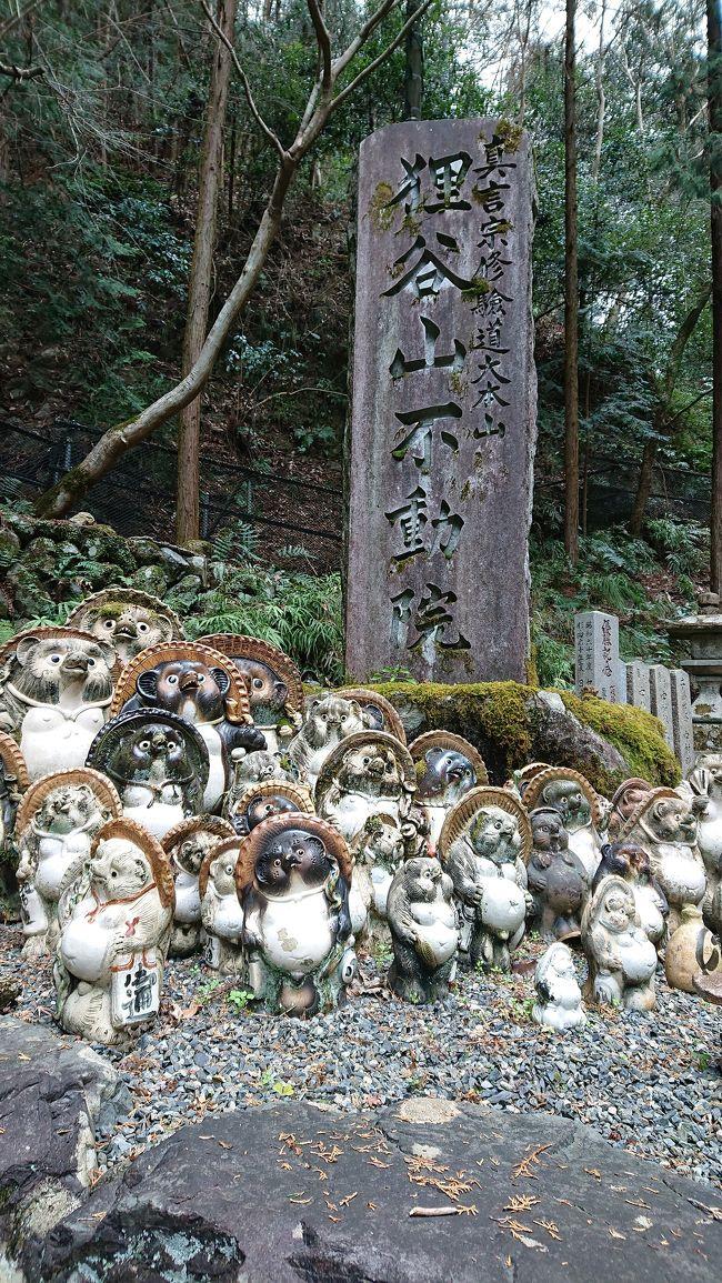 京都市左京区一乗寺にある狸谷山不動院!<br />境内とっても静かで超穴場\(^^)/<br />一乗寺下り松町のバス停から徒歩15分~20分と言うところでしょうか…。<br />信楽かと見惑うほどの狸の置物がとってもキュート!