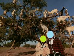 2019年冬~モロッコ9日間⑧AM/アルガンツリーに登るヤギ