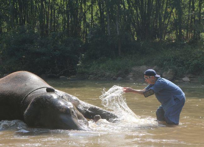 アラフィフ夫婦のタイ&ラオス旅行☆その2☆【チェンマイ郊外で象さんと遊ぶ】