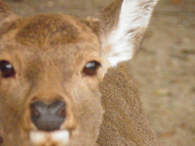 鹿に会いにゆきます。令和元年12月11日。