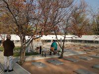 ウズベキスタン2019・・・(10)首都タシケントで日本人墓地など 夜のフライトで帰国(完)