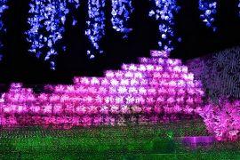 2019年冬休旅行3日目:なばなの里!伊勢神宮&鳥羽水族館&神戸居留地&『梅の花』&実家でテニス&バドミントン&USJ:8泊10日:家族で!