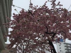冬の東京をぶらぶら 2月