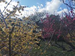 梅の香りに誘われてー大阪城梅園と西九条安治川隧道3差