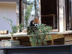 家族で千葉市動物公園に行ってみた