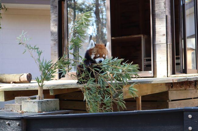 家族で千葉市動物公園に行ってきました。<br />11月でしたが、暖かい日で、行楽日和でした。<br />千葉市動物公園はちょっと前に一世を風靡した、立つことで有名なレッサーパンダの風太くんがいます。<br />それ以外にもたくさんの動物がいて、息子(1歳)だけでなく、大人も楽しめました。<br />今回の旅行記は、動物の写真ばかりとなっております。