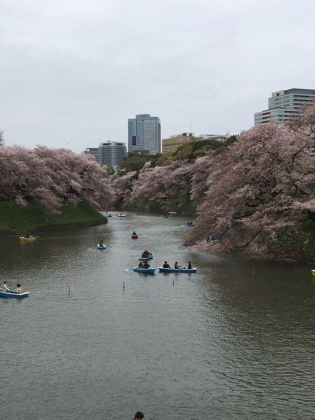 毎年、一年に一回、桜の名所に、お花見に行きま~す!<br /><br />2015年は、東京都千代田区、皇居の北東側に位置する千鳥ケ淵公園の千鳥ヶ淵緑道に行きました。過去、一度行ったことがあるのですが、桜の道には見学徒歩渋滞が。。。しばらく足が遠のいていたのですが、また、行ってみようという事になりました。<br /><br /><br />Walker+(ウォーカープラス): <br />https://hanami.walkerplus.com/detail/ar0313e25833/<br />によると、2020/2現在、人気お花見スポットランキング、全国23位、東京2位<br /><br />2015年3月23日東京で桜開花宣言&#127800;