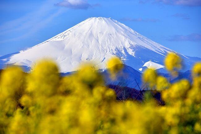 月に一度、しかもたった1時間限定という幻の朝市を追い求めた後、菜の花と富士山を愛でに吾妻山登山。<br />※この概要文、少々盛ってます(笑)<br />