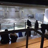 北海道神宮詣りと円山動物園