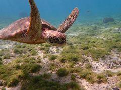 2月上旬冬の沖縄3泊4日 初めての宮古島で海亀と泳ぐ旅