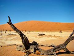 ケープタウン・ナミブ砂漠・ヴィクトリアの滝・チョベ国立公園 ⑦ (デッドフレイ)