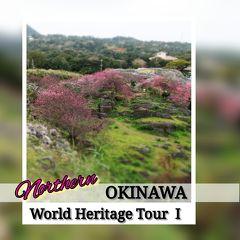 沖縄世界遺産巡り【1】北部、桜まつりの今帰仁城跡 2020年 2月