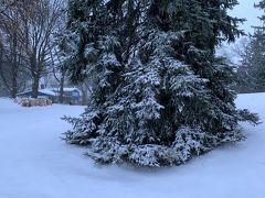 大晦日、元旦、待望の雪