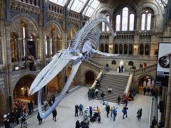 London(2.4) 自然史博物館。恐竜の展示がおざなりでがっかりだった。