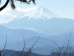 東京・奥多摩<三頭山>豊かな森を作るブナ林 トレッキング