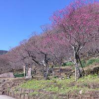 湯河原温泉『梅の宴』へ