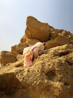 8年ぶり8度目のエジプト8日間(8)クマクマウーとチビチビフーのピラミッド登頂記!?