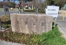 2020新春、平手政秀所縁の地(2/2):2月6日(2):志賀公園、再建された庭園跡、池、紅梅、水仙、サザンカ