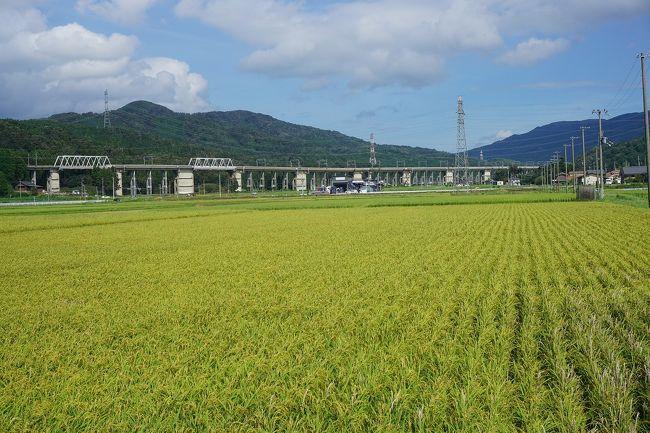 18切符を使って、「近江」な旅をして来ました。<br />画像は、西浅井地区にてです。<br /><br />過去の「近江」な旅行記。<br /><br />関西散歩記~2019 滋賀・大津市編~「JR近江舞子駅」<br />https://4travel.jp/travelogue/11483219<br /><br />関西散歩記~2019 滋賀・高島市編~その1「JR近江高島駅」<br />https://4travel.jp/travelogue/11483220<br /><br />関西散歩記~2019 滋賀・高島市編~その2「JR近江今津駅」<br />https://4travel.jp/travelogue/11483221<br /><br />関西散歩記~2015 滋賀・米原市編~その2「JR近江長岡駅」<br />https://4travel.jp/travelogue/10980717<br /><br />滋賀旅行記~2012 米原市内編~「JR近江長岡駅」<br />https://4travel.jp/travelogue/10720648<br /><br />過去の滋賀・長浜市旅行記。<br /><br />関西散歩記~2018 滋賀・長浜市編~その1<br />https://4travel.jp/travelogue/11354433<br /><br />関西旅行記~2018 滋賀・長浜市編~その2<br />https://4travel.jp/travelogue/11354434<br /><br />関西散歩記~2018 滋賀・長浜市編~その3<br />https://4travel.jp/travelogue/11354436<br /><br />関西散歩記~2015 滋賀・長浜市編~その1<br />https://4travel.jp/travelogue/10982041<br /><br />関西散歩記~2015 滋賀・長浜市編~その2<br />https://4travel.jp/travelogue/10982042<br /><br />関西散歩記~2014 滋賀・長浜市編~<br />http://4travel.jp/travelogue/10939042<br /><br />滋賀県まとめ旅行記。<br /><br />My Favorite 滋賀 VOL.1<br />https://4travel.jp/travelogue/11369233<br />