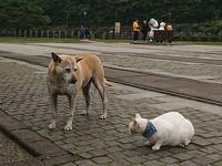 2/10 台北から電車で1時間、猫の村 猴トンへ。かじられました