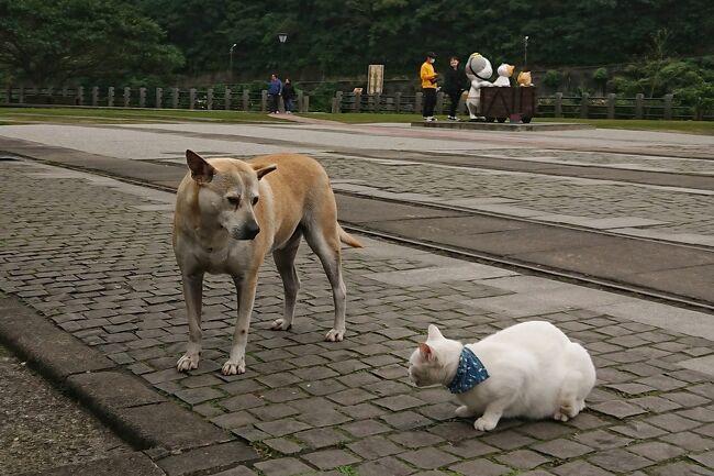 2020 台北から電車で1時間、猫の村 猴トンへ。かじられました