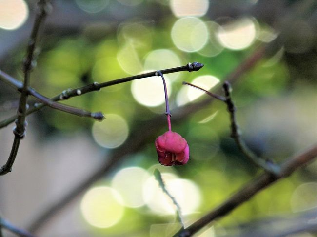だいぶ出不精になってしまってはいるものの、あちらこちらから春の妖精の便りが届き出すと、なんとなくそわそわ・・・<br />この日はお天気も良さそうだったので、毎年恒例になりつつある向島百花園へ出掛けて来ました。<br />向島百花園は江戸時代の開園当時、梅の木がたくさんあったことから「梅は百花にさきがけて咲く」に因んで「百花園」と呼ばれるようになったのだそうです。<br />小さいながら野趣豊かで、人気のある庭園です。<br />去年は会えなかったセツブンソウに、かろうじてですが(^-^; 会えましたよ♪<br /><br />            (2010.2.12 記)<br /><br />