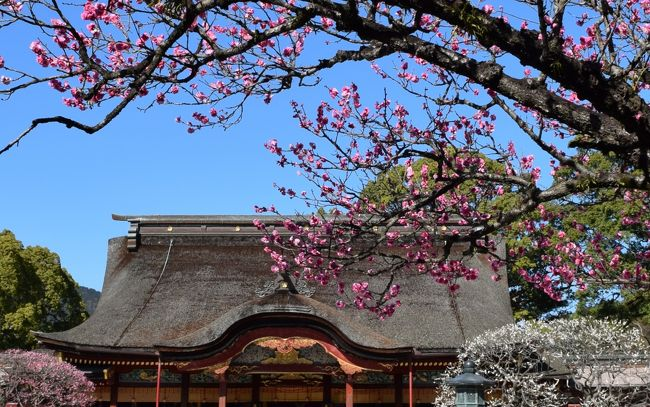 大宰府天満宮の梅の開花が気になる季節になりました<br />境内には200種・約6000本の梅の木があります<br />1月下旬から3月上旬にかけて見頃を迎えるお花が次々と開花しますので<br />その時々に楽しむことができます<br />2/14は紅梅が見頃でした<br />梅は綺麗ですがうまく撮れません <br /><br />本日は梅を見て 最近オープンした古民家をリニュアルしたホテル<br />でのランチ~九州国立博物館で開催中の『フランス絵画の精華』を拝観<br />という予定で訪れました<br /><br />太宰府天満宮<br />天満宮は全国に1万2000程ありますが太宰府はその総本宮<br />