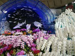 世界らん展で初めて東京ドームに行ってきました!