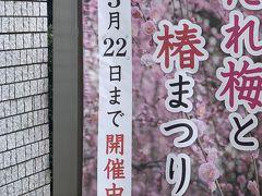 梅だより!城南宮と天満宮!News from plum!  Jonangu and Tenmangu Shrine