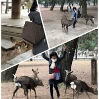 2020.2 3年半ぶりの微熟女三人旅in奈良①…鹿にモテモテの微熟女3人