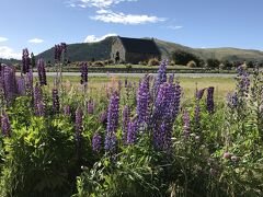 年越しニュージーランド旅行⑥ テカポ湖