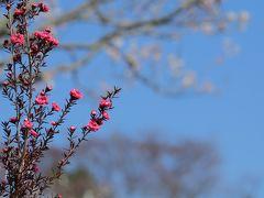 春を感じにふらっとお出かけ ~みとろの梅も早かった~