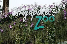 動物ずくめのシンガポールひとり旅 13 シンガポール動物園 入園!の部