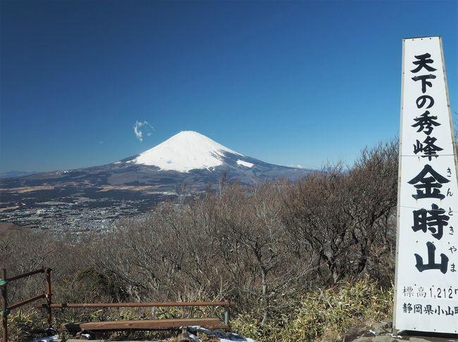 1月は予定が入っている週末に限って晴れるという事が続き、今年の初登山になります。冬の空気が澄んだ時期に富士山を見たいという事で選んだのが、金時山。箱根火山の外輪山の最高峰で、富士山の眺望が抜群と人気の山です。登山コースはいくつかありますが、初めてなので公時神社を参拝してから登ろうという事になりました。<br /><br />今回のコース  金時神社入口バス停 ~ 公時神社 ~ 金時宿り石 ~ 公時神社分岐 ~ 金時山山頂 ~ 公時神社分岐 ~ 矢倉沢峠 ~ 金時登山口バス停<br /><br />新宿からは小田急高速バス。始発に乗車し、10分ほど遅れ8時50分に金時神社バス停に到着。公時神社を参拝し出発。前半は凍っている所もいくつかあり、慎重に登ります。途中からアイゼンを装着し、約2時間で山頂へ。そこからは雲一つない富士山の絶景が待っていました。<br />