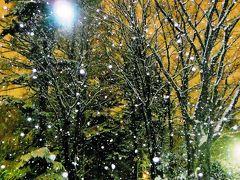 真冬の木々たち