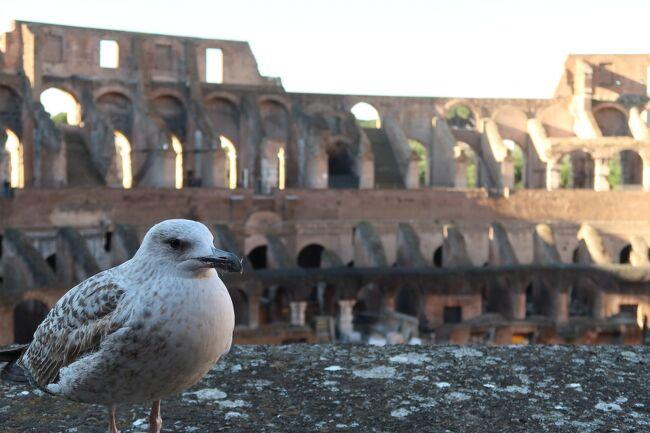 イタリア・ローマとフランス・パリの歴史を感じながら訪問した旅行記です!<br /><br />2月13日午前:日本出発<br />同日夜:ローマに到着<br />14日15日:ローマ観光<br />16日:パリへ移動、観光<br />~2月18日:パリ観光<br />19日:空港に行く前にヴェルサイユ→飛行機<br />20日:帰国!!<br /><br />という日程で訪問しました!<br />【観光POINT】として旅行をする中での様々なポイントも紹介しているのでぜひ参考にしてください!<br />また、史実を間違えて書いているところがあるかもしれませんのでご注意ください。<br />載せている写真はCanonのPowerShot G7 X Mark Ⅱ を使いました!素人にも綺麗な写真がわかりやすい操作性で撮れます!<br /><br />《私はアジア人差別には全く合わず、現地の方皆さんとても優しく、フレンドリーに接していただきとても楽しい旅になりました》<br /><br />今回はそのPart2です!<br />8:30-9:30 コロッセオ<br />9:50-11:30 フォロ・ロマーノ、パラティーノの丘<br />11:45-12:15 真実の口<br />14:20-15:20 カラカラ浴場<br />16:15-16:30 パンテオン<br />17:30-18:00サン・ルイージ・デイ・フランチェージ教会<br />という旅程です!予定の大幅変更で大変な1日でした(^_^;)