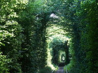 リヴネ 発狂 夏の愛のトンネルとキエフからのアクセス