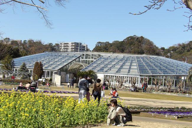 日比谷花壇大船フラワーセンター(https://4travel.jp/travelogue/11603337)の北部角地にグリーンハウスがある。単なる温室である。冬場ではあるといえ、さすがにここグリーンハウスの温室内には花が咲き誇っている。勿論、暖かい国々の植物ばかりである。<br />(表紙写真はグリーンハウスの温室)