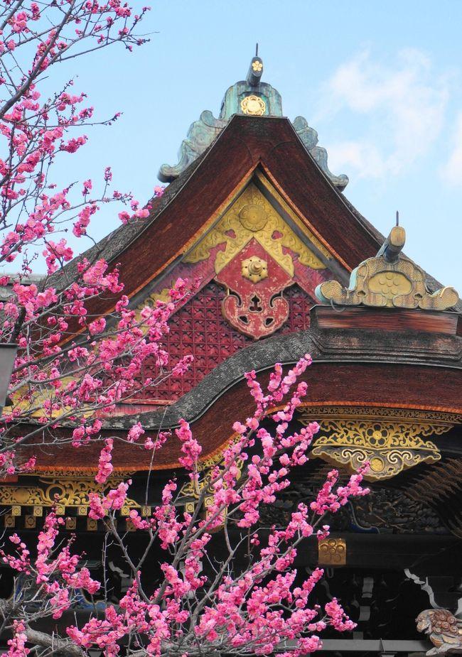 京都嵐山に、2019年10月新たな私設美術館「福田美術館」が誕生。<br />松園作品を中心に、東西で活躍した画家による美人画を展示する「美人のすべて」を鑑賞、心豊かな時間が過ごせました。<br />その後は、北野天満宮で梅を鑑賞。<br />境内に咲き誇る可愛い花に癒されました。<br />