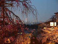 ひとりお花見部2019 岡崎~東山 久しぶりに清水寺の夜桜で〆 二日め後半篇
