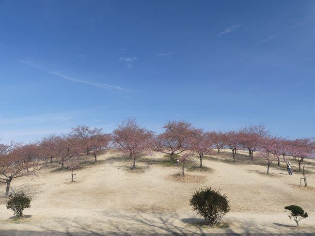 2月20日に、伊勢崎市の「いせさき市民のもり公園」へ、河津桜を見に行きました。咲き始めてはいましたが、まだまだ1分咲きにも満たないくらいの咲具合でした。<br /><br />この一週間後(2月27日)に再訪したときの、ほぼ満開で見頃の河津桜は、次の旅行記で紹介します。
