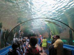JALファーストクラスでシドニー(4)シー・ライフ・シドニー水族館