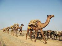 ダナキル砂漠:塩のキャラバン
